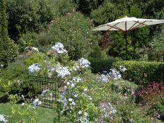 Vrije tuin met veel bloemen