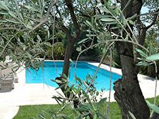 Zicht door de olijfboom op het zwembad